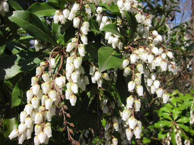 A tree of bell flowers