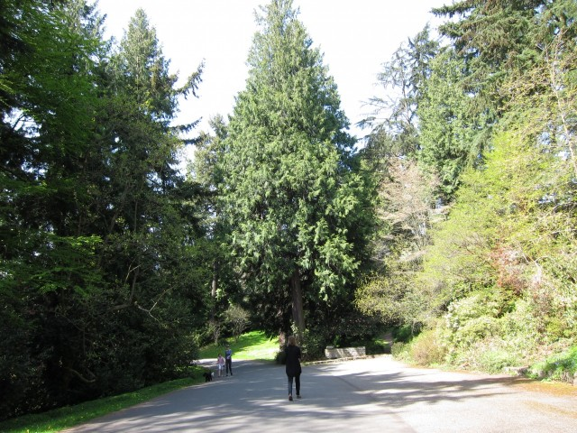 Entering arboretum