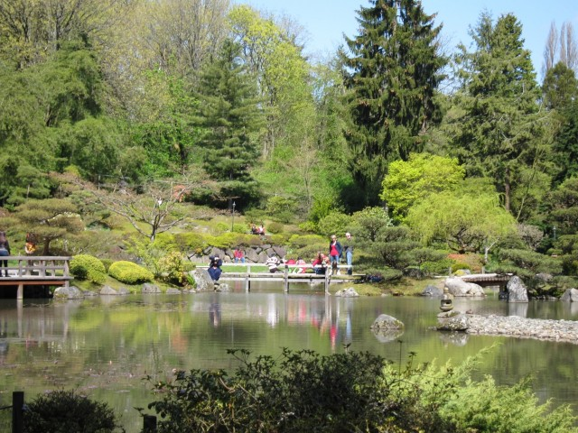 Lake in Seattle Japanese garden