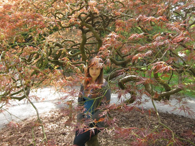 Me in Japanese maple tree