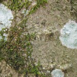 mold spot texture
