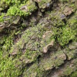 mossy bark texture