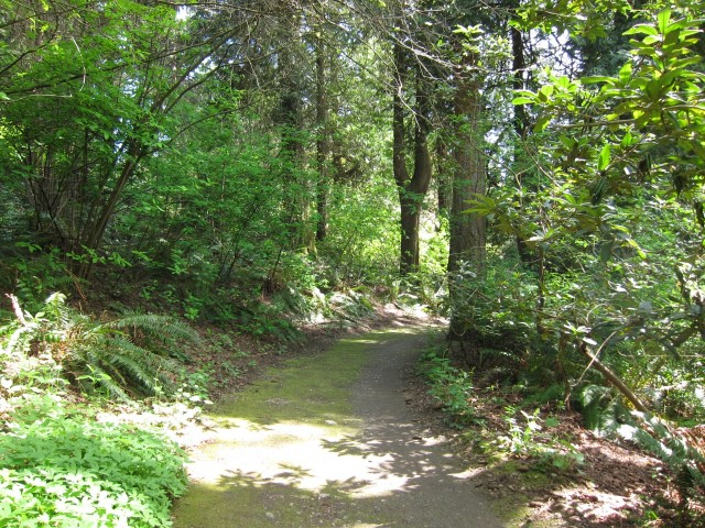 mossy path in arboretum