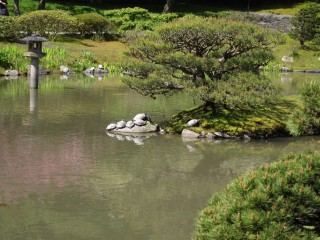 Sleeping turtles in Japanese garden
