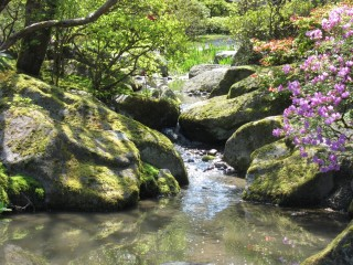 stream in Japanese Garden
