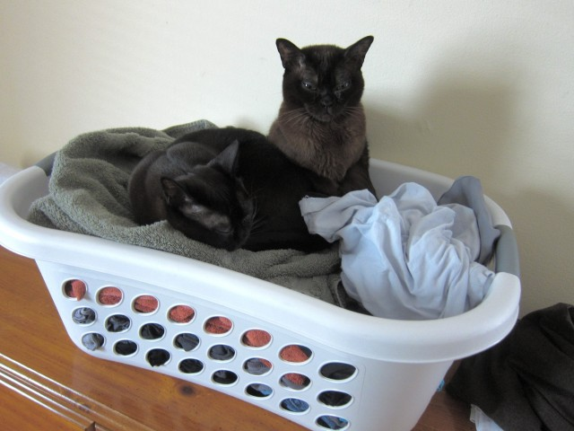 cats in the hamper